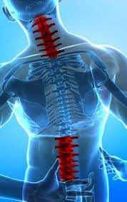 Neck and Lumbar Spine animae